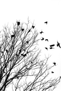 birds flying from tree